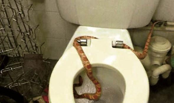 Туалеты - 14