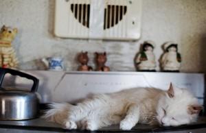 Кошки-оккупанты