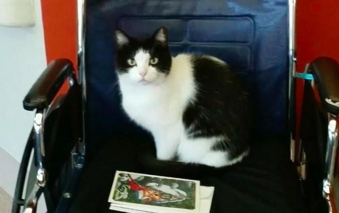 Бездомная кошка в доме престарелых - 1