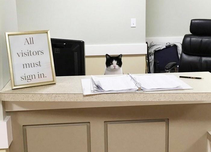 Бездомная кошка в доме престарелых - 4