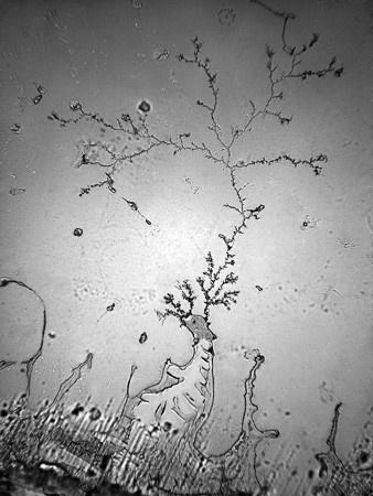 Слезы под микроскопом - 11
