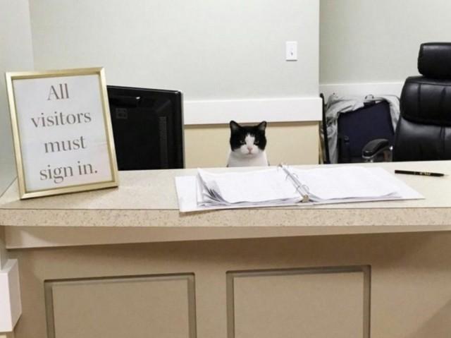 Бездомная кошка в доме престарелых