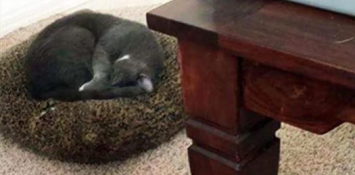 Наглые кошки - 2.1