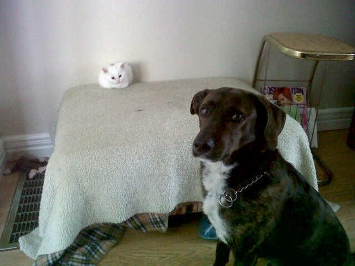 Наглые кошки - 5