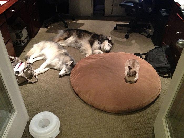 Наглые кошки - 13