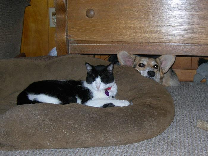 Наглые кошки - 14