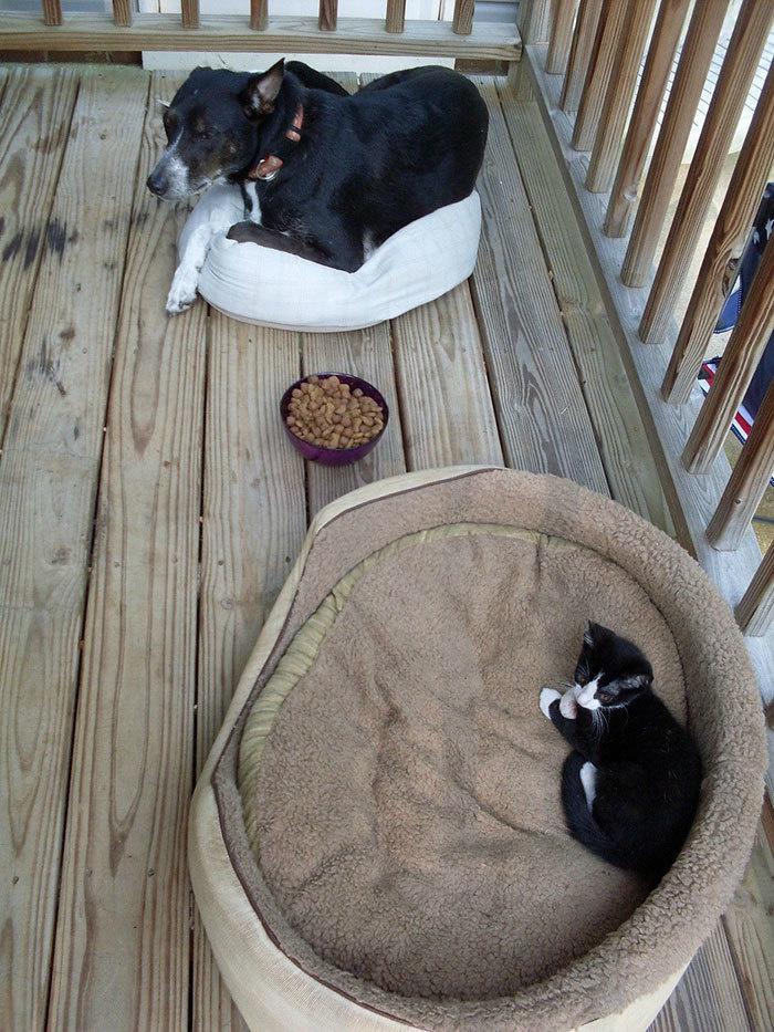 Наглые кошки - 16