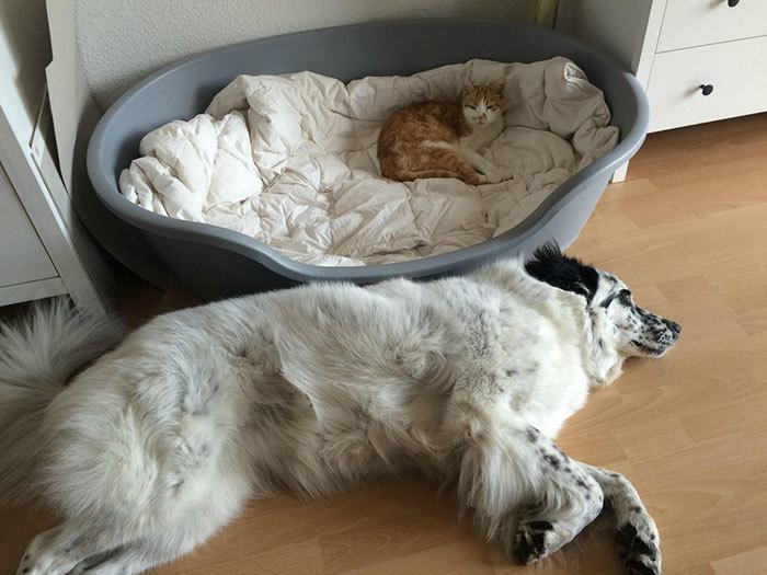 Наглые кошки - 19