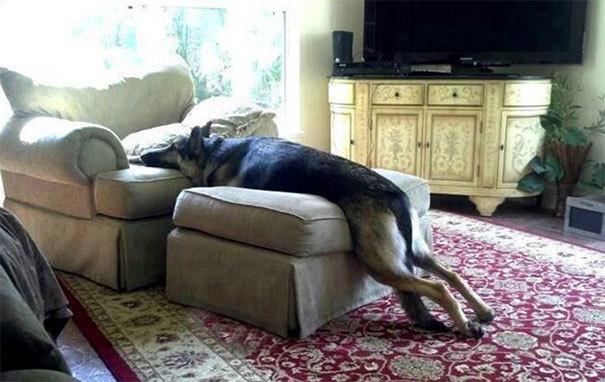 Собаки-нарушаки - 1