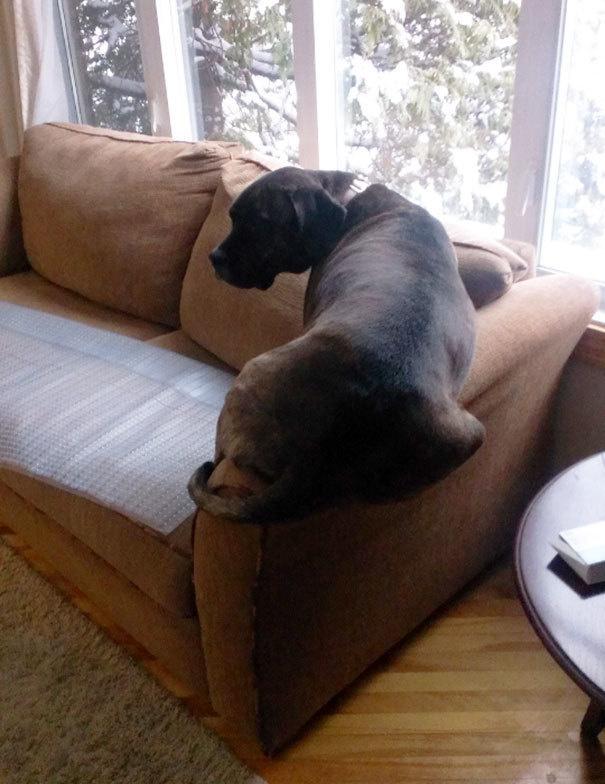 Собаки-нарушаки - 17