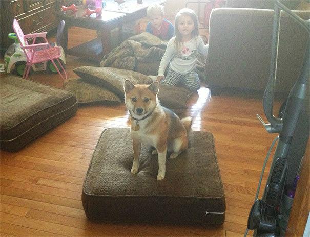 Собаки-нарушаки - 21