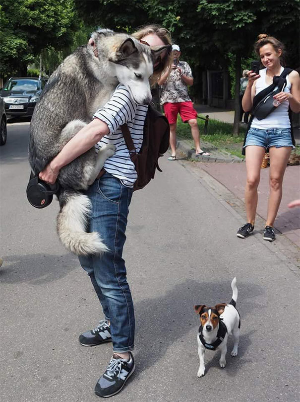 Собаки боятся - 4