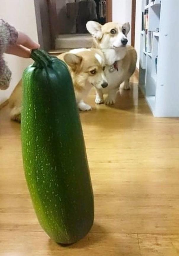 Собаки боятся - 9