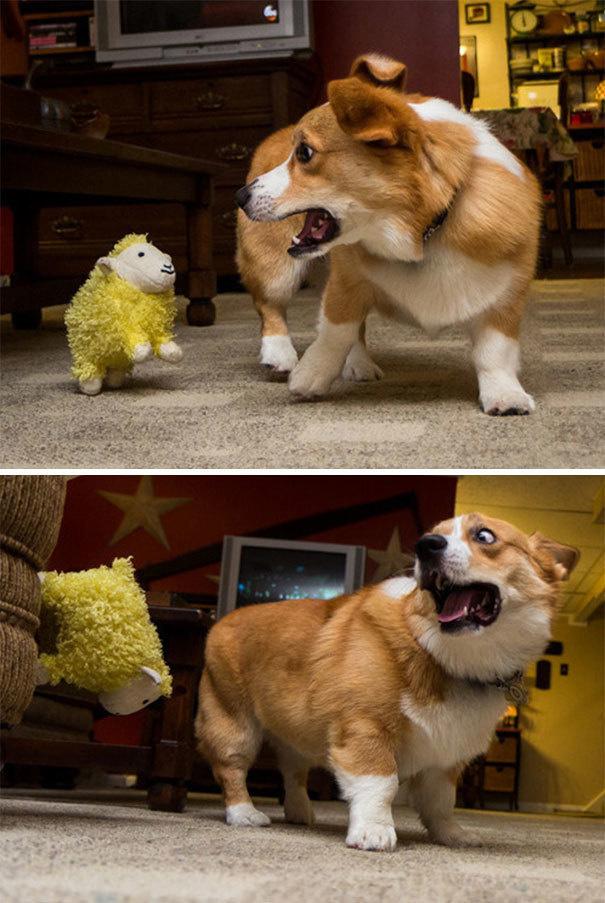 Собаки боятся - 11