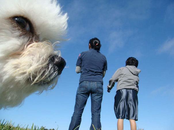 Наглые собаки - 4