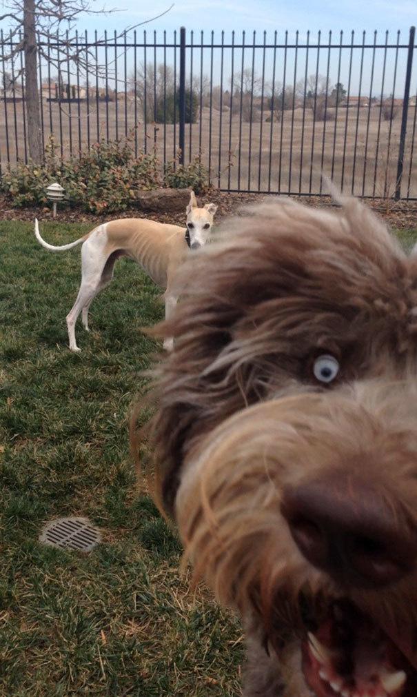 Наглые собаки - 7