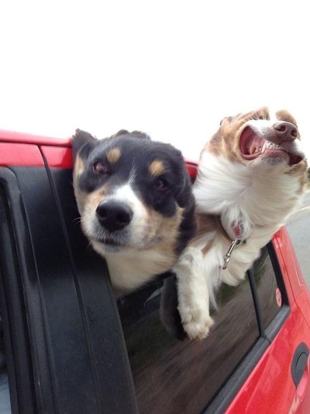 Наглые собаки - 12
