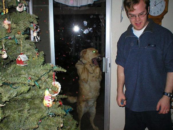 Наглые собаки - 17