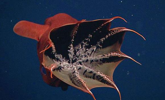 Морские чудища - 1