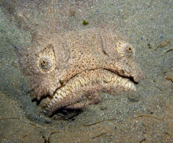 Морские чудища - 8