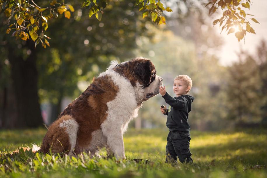 Собаки и дети - 1