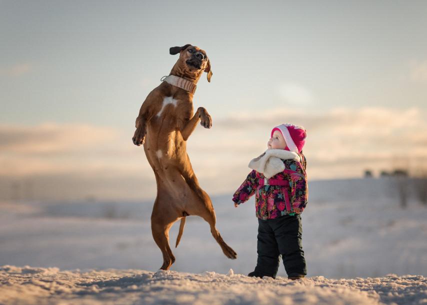 Собаки и дети - 3