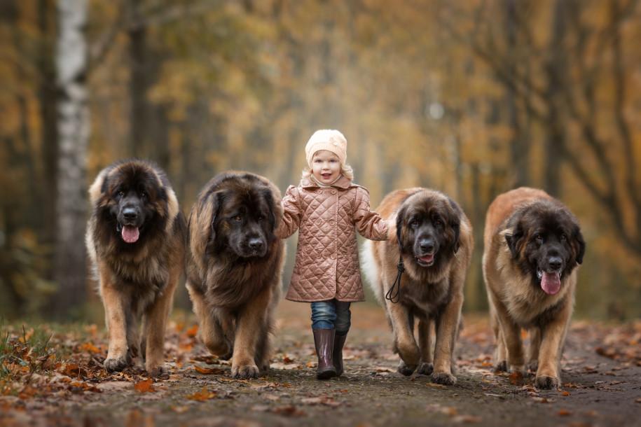 Собаки и дети - 4