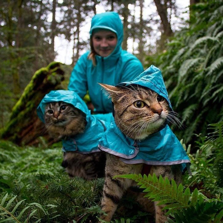 Кошки с небес - 6