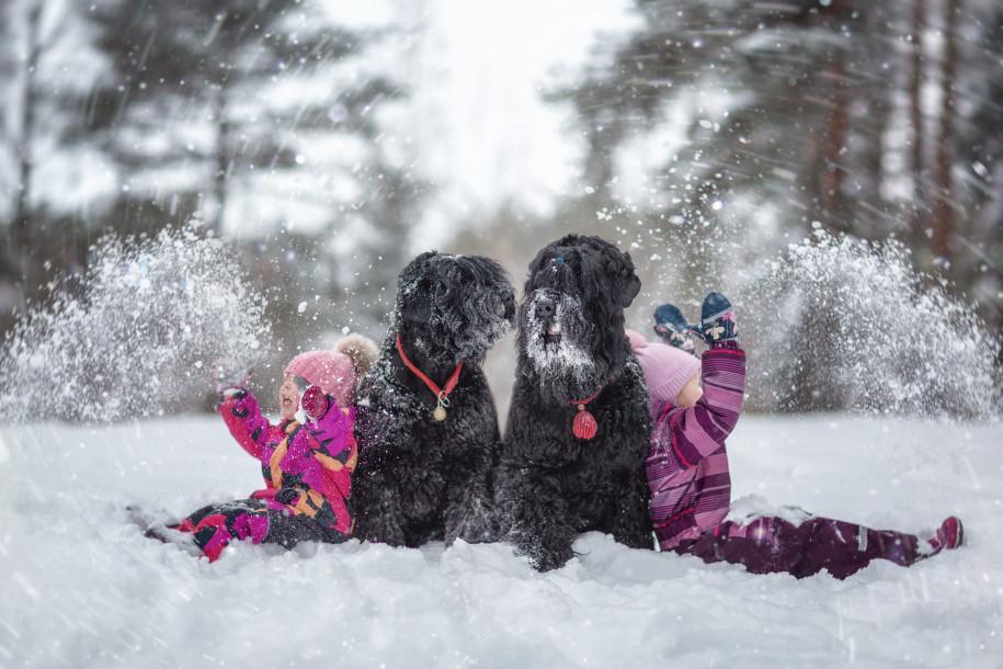 Собаки и дети - 7