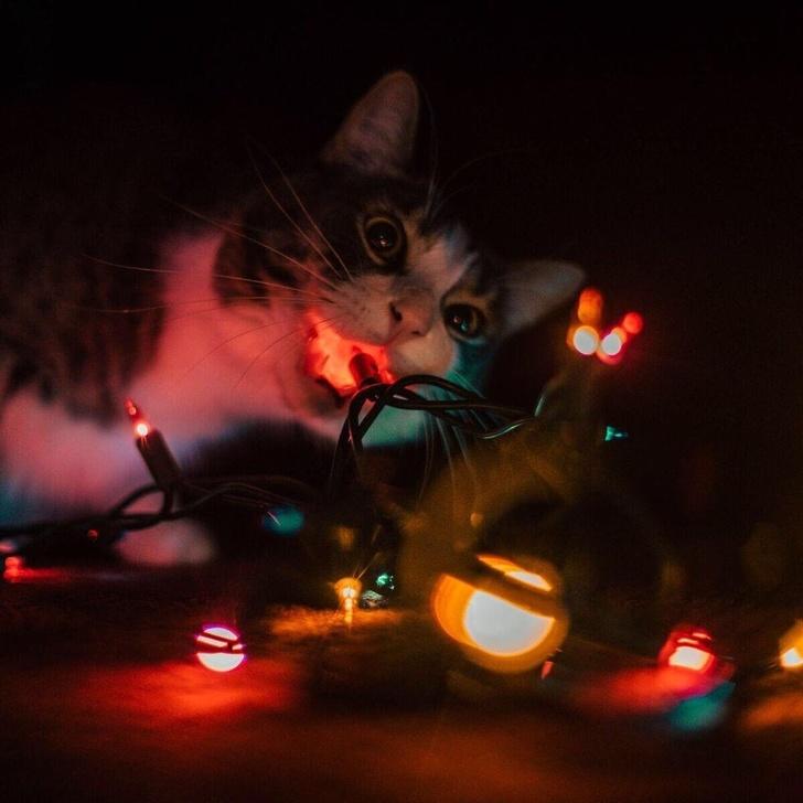Кошки с небес - 8