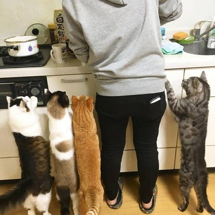 Кошки с небес - 9