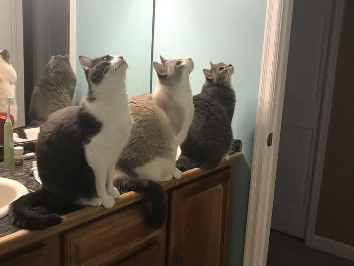 Кошки с небес - 11