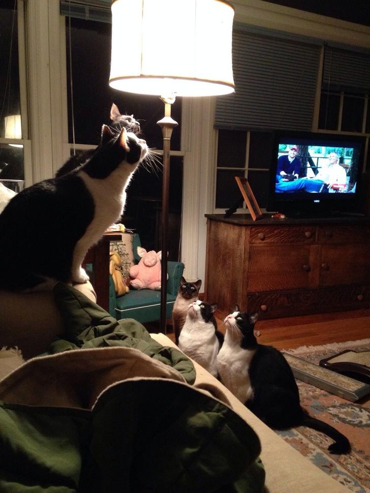 Кошки с небес - 12