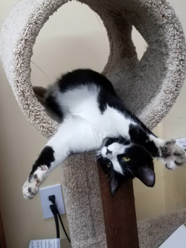 Кошки с небес - 15