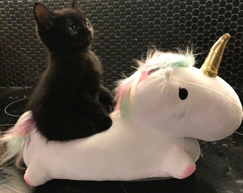Кошки с небес - 17