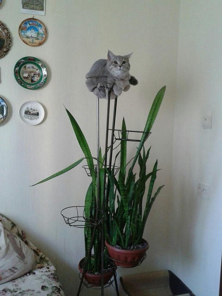 Кошки с небес - 19