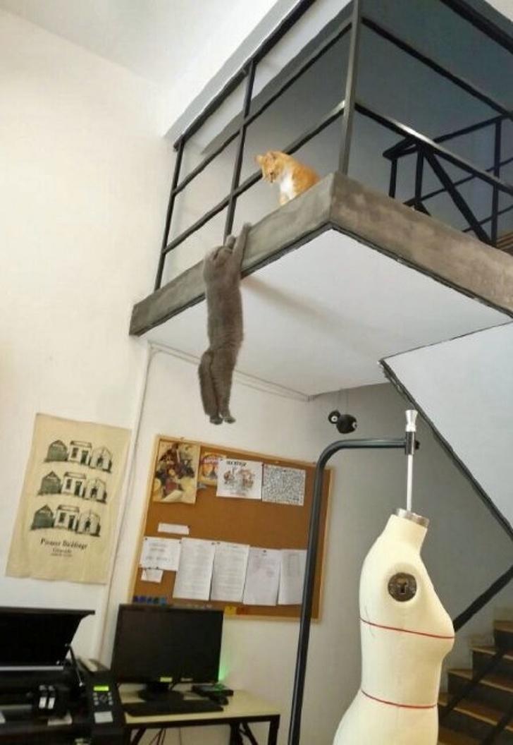 Кошки с небес - 30