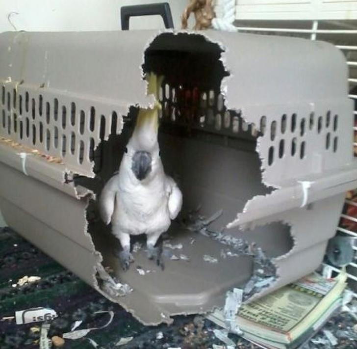 Тайная жизнь животных - 11