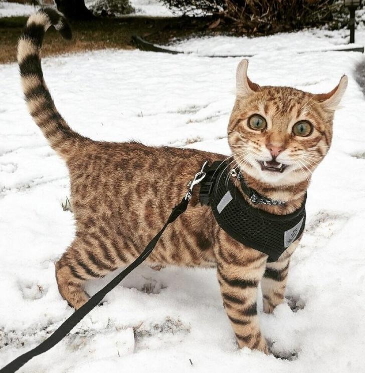 Кошки не любят снег - 1