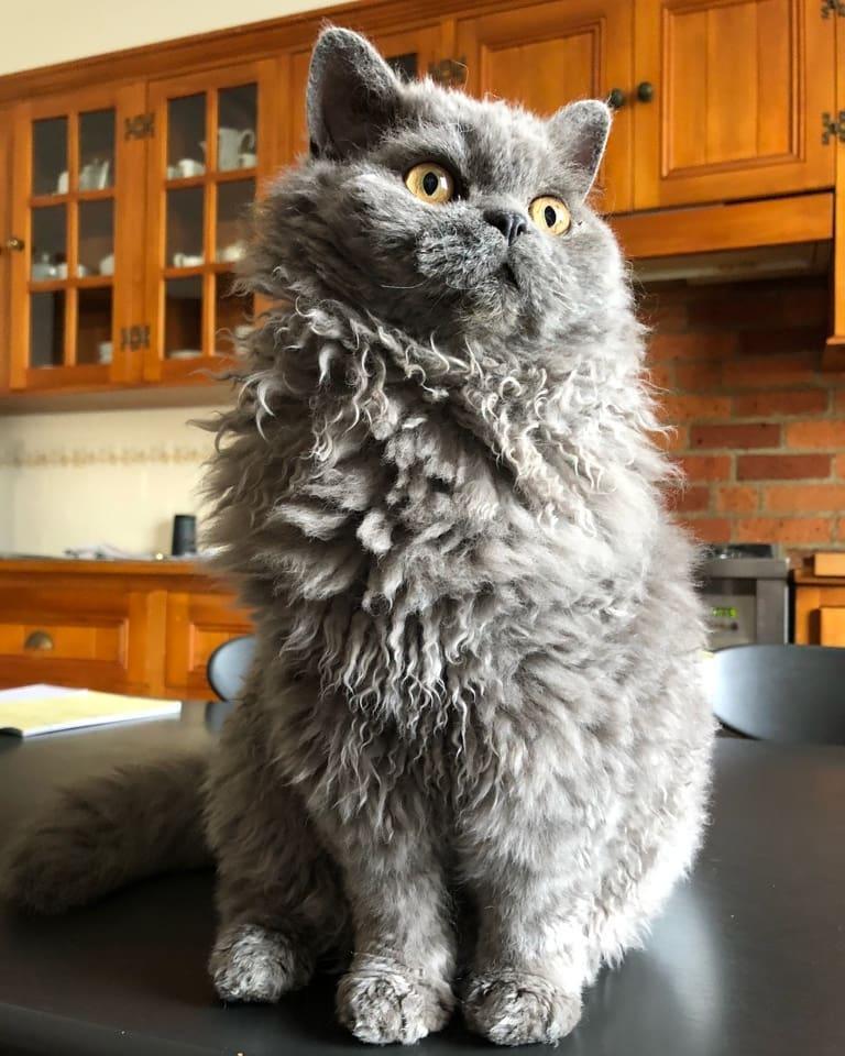 девичника кудрявый кот фотографии положения