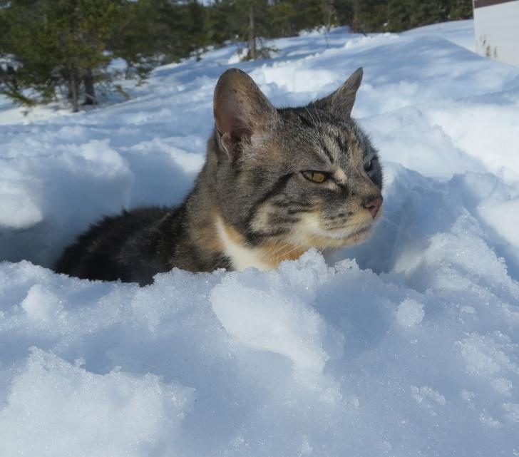 Кошки не любят снег - 4