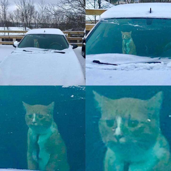 Кошки не любят снег - 5