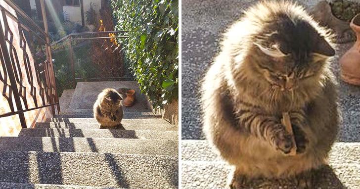 Милые котики - 6