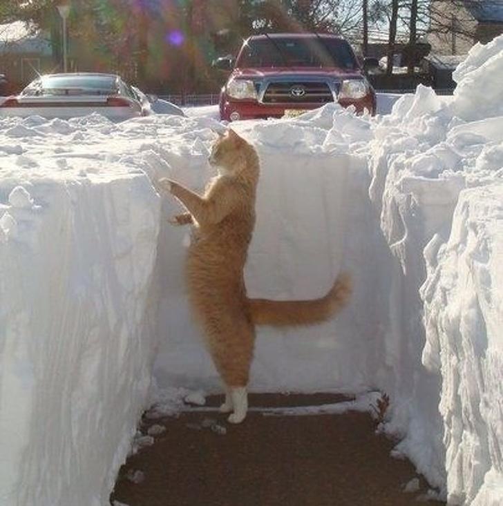 Кошки не любят снег - 6