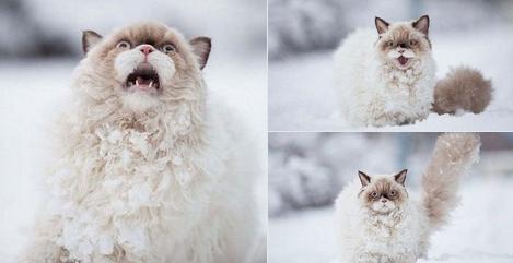 Кошки не любят снег - 8