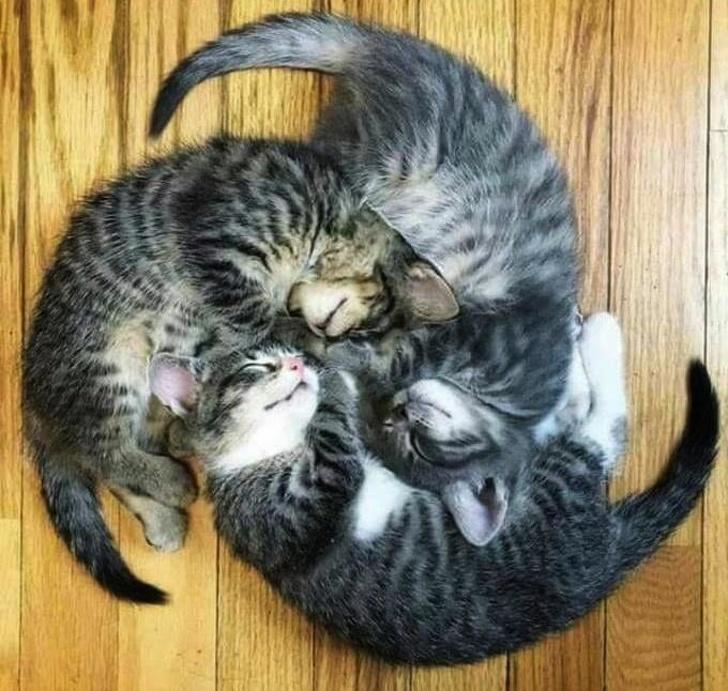 Милые котики - 9