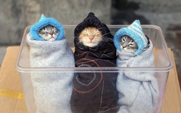 Милые котики - 10