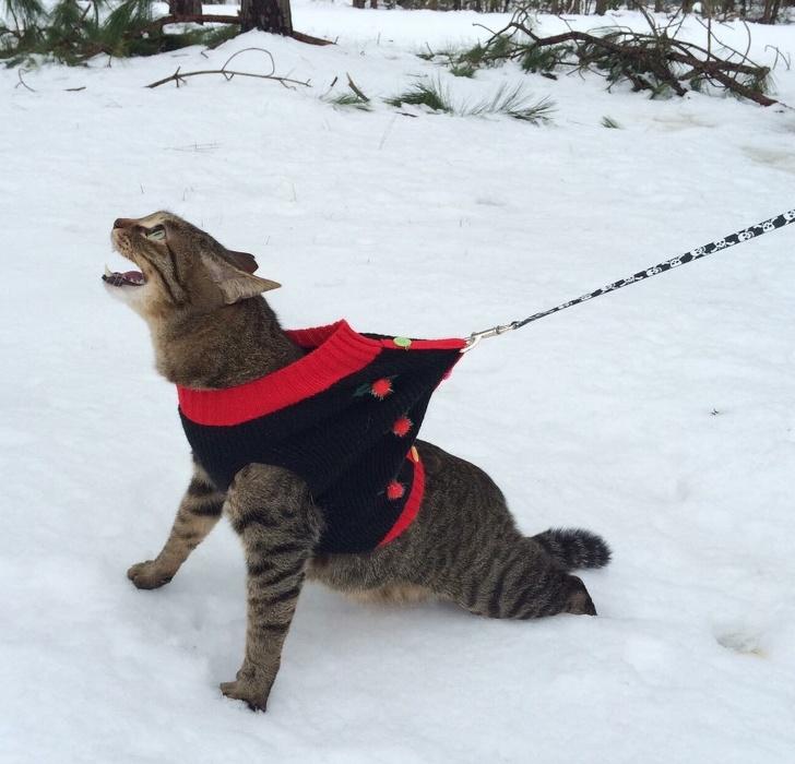 Кошки не любят снег - 10