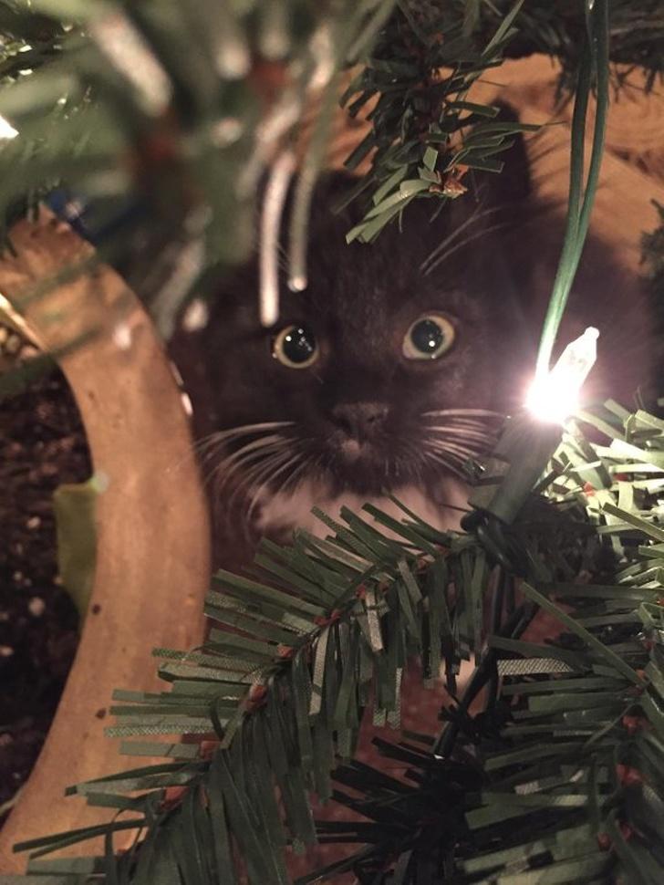 Милые котики - 12