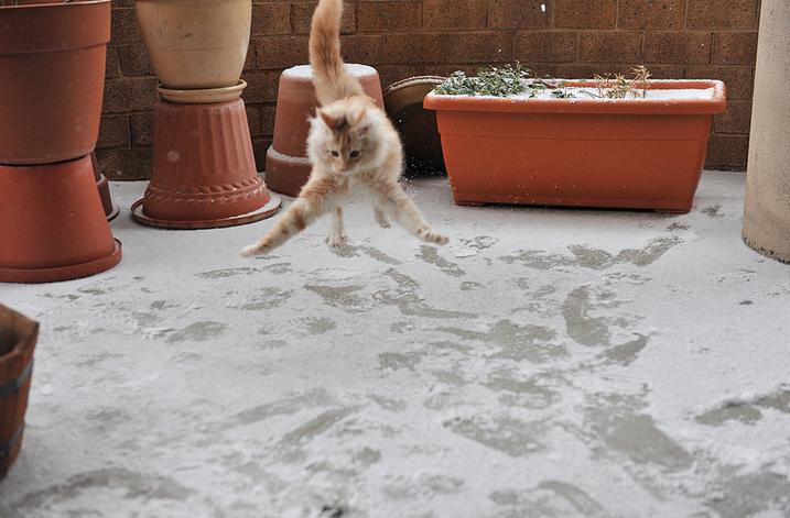 Кошки не любят снег - 12.3